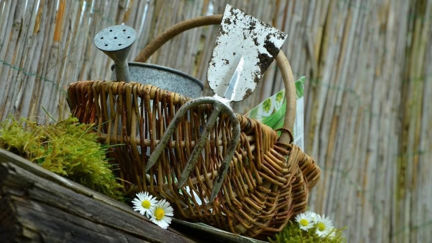 Saint bonnet pr s riom march aux fleurs et l gumes agenda - Central jardin saint bonnet pres riom ...