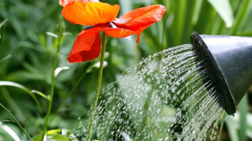 Clermont ferrand nature et jardin agenda - Abri jardin fer clermont ferrand ...