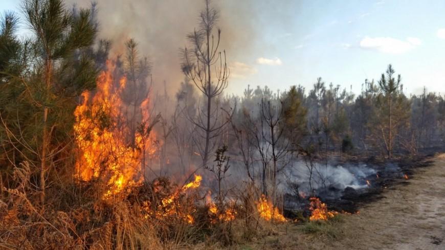 Gros incendie de forêt près du viaduc de Garabit (Cantal)