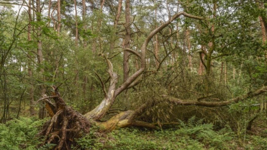 Tempête Amélie : Annulation du Trail de Royat