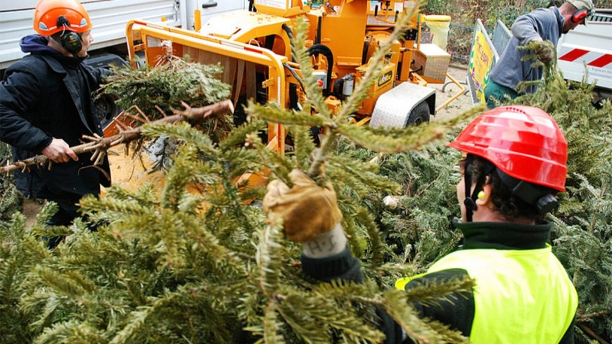 Que faire de votre sapin de Noël dans le Puy-de-Dôme ?