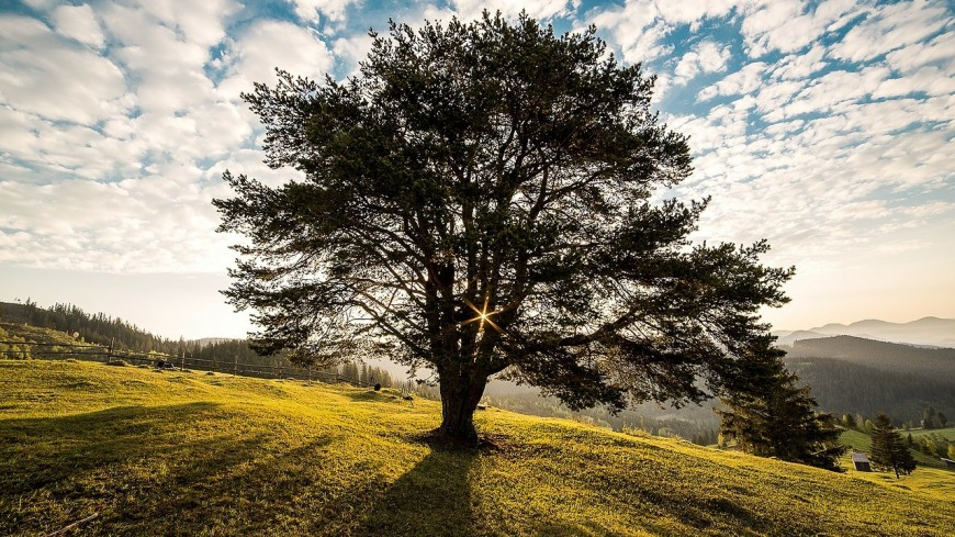 Un nouvel arbre remarquable reconnu dans le Puy-de-Dôme