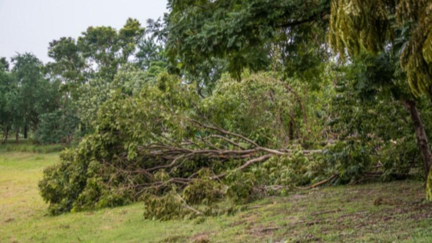 15.000 foyers privés d'électricité en Auvergne à cause de la tempête Barbara