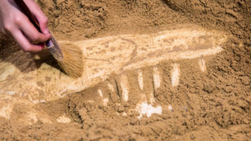 AULNAT - Une sépulture d'un enfant datant du Ier siècle a été découverte à l'aéroport