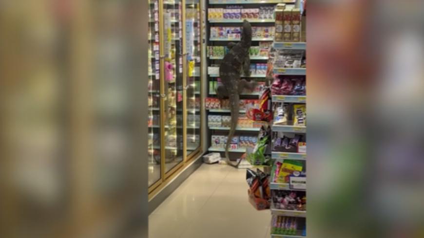 Insolite - Un Varan énorme s'introduit dans un supermarché ! (vidéo)