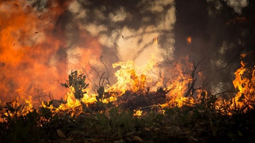 Corrèze - trois départs de feux de forêt simultanés