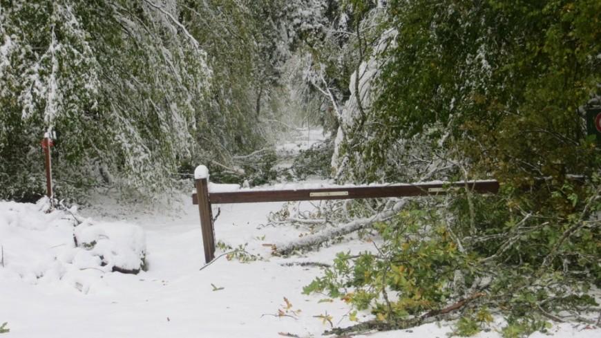 Forêt de la Comté : accès interdit au public
